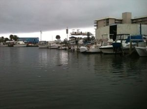 New Smyrna Beach Marina, with a manatee swimming in the dock