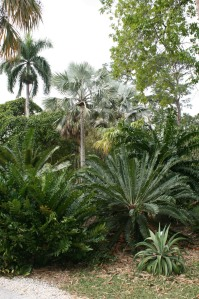 Tropical plants making striking contrasts of form and texture