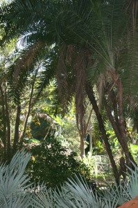 The Palm and Cycad walk