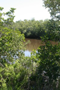 A brief glimpse of the river shore through the mangrove
