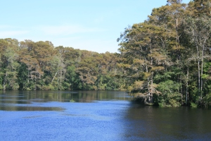 Autumn tints on the Waccamaw River