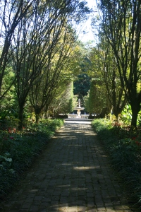 The Hornbeam Walk