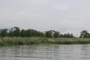 Reedy Island, Delaware River