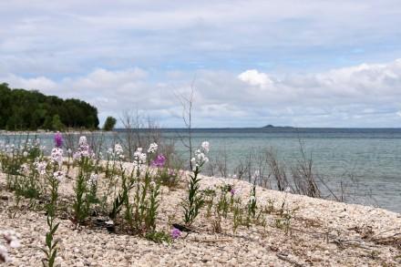 IMG_0011flowers on the beach